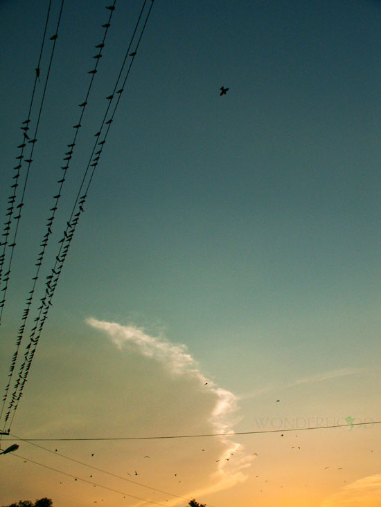 И поливают воздух радостным свистом